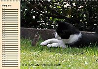 Unsere Katzen. Wie sie wirklich sind! (Wandkalender 2019 DIN A2 quer) - Produktdetailbild 3