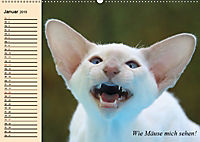Unsere Katzen. Wie sie wirklich sind! (Wandkalender 2019 DIN A2 quer) - Produktdetailbild 1