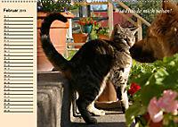 Unsere Katzen. Wie sie wirklich sind! (Wandkalender 2019 DIN A2 quer) - Produktdetailbild 2