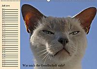 Unsere Katzen. Wie sie wirklich sind! (Wandkalender 2019 DIN A2 quer) - Produktdetailbild 7