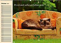 Unsere Katzen. Wie sie wirklich sind! (Wandkalender 2019 DIN A2 quer) - Produktdetailbild 10