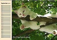 Unsere Katzen. Wie sie wirklich sind! (Wandkalender 2019 DIN A2 quer) - Produktdetailbild 9