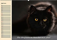 Unsere Katzen. Wie sie wirklich sind! (Wandkalender 2019 DIN A2 quer) - Produktdetailbild 6