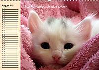 Unsere Katzen. Wie sie wirklich sind! (Wandkalender 2019 DIN A2 quer) - Produktdetailbild 8