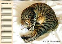 Unsere Katzen. Wie sie wirklich sind! (Wandkalender 2019 DIN A2 quer) - Produktdetailbild 12