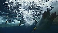 Unsere Ozeane - Die komplette TV-Serie - Produktdetailbild 4
