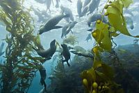 Unsere Ozeane - Die komplette TV-Serie - Produktdetailbild 5