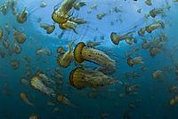 Unsere Ozeane - Die komplette TV-Serie - Produktdetailbild 1