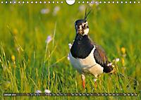 Unsere Wiesenvögel - Bezaubernde Schönheiten (Wandkalender 2019 DIN A4 quer) - Produktdetailbild 1
