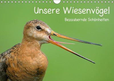 Unsere Wiesenvögel - Bezaubernde Schönheiten (Wandkalender 2019 DIN A4 quer), Christof Wermter