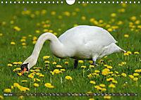 Unsere Wiesenvögel - Bezaubernde Schönheiten (Wandkalender 2019 DIN A4 quer) - Produktdetailbild 5