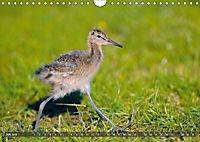 Unsere Wiesenvögel - Bezaubernde Schönheiten (Wandkalender 2019 DIN A4 quer) - Produktdetailbild 7