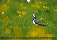 Unsere Wiesenvögel - Bezaubernde Schönheiten (Wandkalender 2019 DIN A4 quer) - Produktdetailbild 8