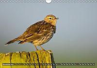 Unsere Wiesenvögel - Bezaubernde Schönheiten (Wandkalender 2019 DIN A4 quer) - Produktdetailbild 11