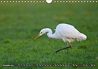 Unsere Wiesenvögel - Bezaubernde Schönheiten (Wandkalender 2019 DIN A4 quer) - Produktdetailbild 12
