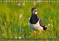 Unsere Wiesenvögel - Bezaubernde Schönheiten (Tischkalender 2019 DIN A5 quer) - Produktdetailbild 1