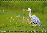 Unsere Wiesenvögel - Bezaubernde Schönheiten (Tischkalender 2019 DIN A5 quer) - Produktdetailbild 2