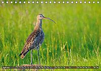 Unsere Wiesenvögel - Bezaubernde Schönheiten (Tischkalender 2019 DIN A5 quer) - Produktdetailbild 4