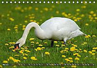 Unsere Wiesenvögel - Bezaubernde Schönheiten (Tischkalender 2019 DIN A5 quer) - Produktdetailbild 5