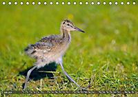 Unsere Wiesenvögel - Bezaubernde Schönheiten (Tischkalender 2019 DIN A5 quer) - Produktdetailbild 7