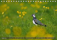 Unsere Wiesenvögel - Bezaubernde Schönheiten (Tischkalender 2019 DIN A5 quer) - Produktdetailbild 8