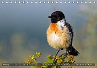 Unsere Wiesenvögel - Bezaubernde Schönheiten (Tischkalender 2019 DIN A5 quer) - Produktdetailbild 6