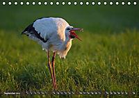 Unsere Wiesenvögel - Bezaubernde Schönheiten (Tischkalender 2019 DIN A5 quer) - Produktdetailbild 9