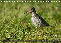 Unsere Wiesenvögel - Bezaubernde Schönheiten (Tischkalender 2019 DIN A5 quer) - Produktdetailbild 10