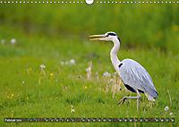 Unsere Wiesenvögel - Bezaubernde Schönheiten (Wandkalender 2019 DIN A3 quer) - Produktdetailbild 2