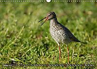 Unsere Wiesenvögel - Bezaubernde Schönheiten (Wandkalender 2019 DIN A3 quer) - Produktdetailbild 10