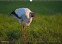 Unsere Wiesenvögel - Bezaubernde Schönheiten (Wandkalender 2019 DIN A3 quer) - Produktdetailbild 9