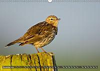 Unsere Wiesenvögel - Bezaubernde Schönheiten (Wandkalender 2019 DIN A3 quer) - Produktdetailbild 11