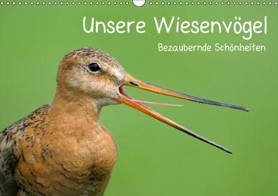 Unsere Wiesenvögel - Bezaubernde Schönheiten (Wandkalender 2019 DIN A3 quer), Christof Wermter