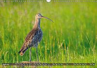 Unsere Wiesenvögel - Bezaubernde Schönheiten (Wandkalender 2019 DIN A3 quer) - Produktdetailbild 4