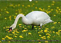 Unsere Wiesenvögel - Bezaubernde Schönheiten (Wandkalender 2019 DIN A3 quer) - Produktdetailbild 5