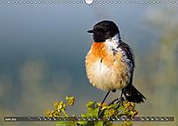 Unsere Wiesenvögel - Bezaubernde Schönheiten (Wandkalender 2019 DIN A3 quer) - Produktdetailbild 6