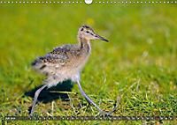 Unsere Wiesenvögel - Bezaubernde Schönheiten (Wandkalender 2019 DIN A3 quer) - Produktdetailbild 7