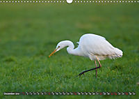 Unsere Wiesenvögel - Bezaubernde Schönheiten (Wandkalender 2019 DIN A3 quer) - Produktdetailbild 12