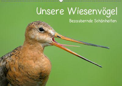 Unsere Wiesenvögel - Bezaubernde Schönheiten (Wandkalender 2019 DIN A2 quer), Christof Wermter