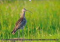 Unsere Wiesenvögel - Bezaubernde Schönheiten (Wandkalender 2019 DIN A2 quer) - Produktdetailbild 4