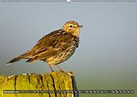 Unsere Wiesenvögel - Bezaubernde Schönheiten (Wandkalender 2019 DIN A2 quer) - Produktdetailbild 11