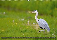 Unsere Wiesenvögel - Bezaubernde Schönheiten (Wandkalender 2019 DIN A2 quer) - Produktdetailbild 2