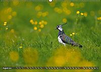 Unsere Wiesenvögel - Bezaubernde Schönheiten (Wandkalender 2019 DIN A2 quer) - Produktdetailbild 8