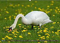Unsere Wiesenvögel - Bezaubernde Schönheiten (Wandkalender 2019 DIN A2 quer) - Produktdetailbild 5