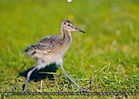 Unsere Wiesenvögel - Bezaubernde Schönheiten (Wandkalender 2019 DIN A2 quer) - Produktdetailbild 7