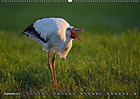 Unsere Wiesenvögel - Bezaubernde Schönheiten (Wandkalender 2019 DIN A2 quer) - Produktdetailbild 9