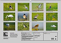 Unsere Wiesenvögel - Bezaubernde Schönheiten (Wandkalender 2019 DIN A2 quer) - Produktdetailbild 13