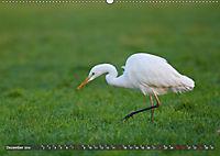 Unsere Wiesenvögel - Bezaubernde Schönheiten (Wandkalender 2019 DIN A2 quer) - Produktdetailbild 12