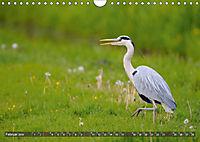 Unsere Wiesenvögel - Bezaubernde Schönheiten (Wandkalender 2019 DIN A4 quer) - Produktdetailbild 2