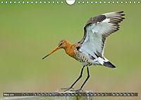 Unsere Wiesenvögel - Bezaubernde Schönheiten (Wandkalender 2019 DIN A4 quer) - Produktdetailbild 3